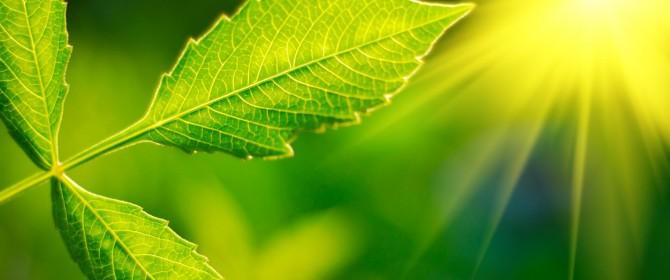 celle solari biologiche, le nuove tecnologie per produrre energia elettrica