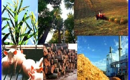 come funziona l'energia a biomasse