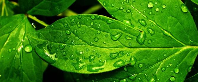 come produrre energia elettrica a partire dai vegetali