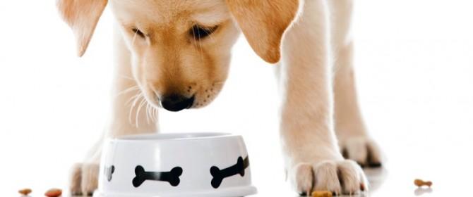 Cani e gatti generano seri danni ai nostri smartphone: come proteggersi?