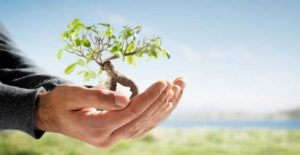 6 modi per conservare la biodiversità
